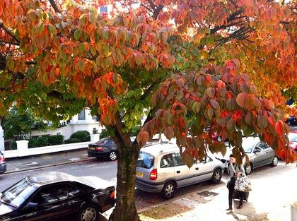 autumn.JPGのサムネール画像