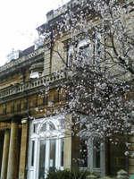 Oxfordの桜